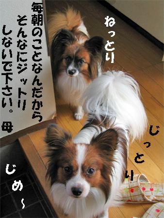 yuzukota071101-2.jpg