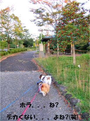 yuzukota071104-1.jpg