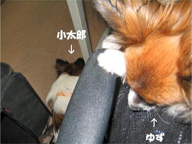 yuzukota071106-1.jpg