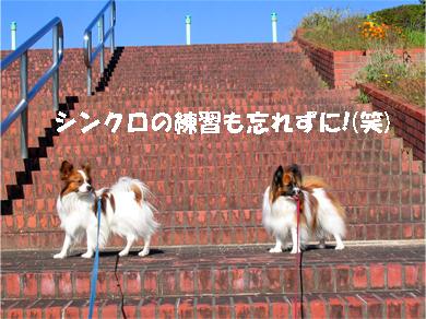 yuzukota071106-2.jpg