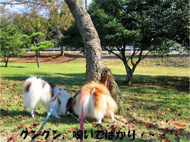 yuzukota071106-3.jpg