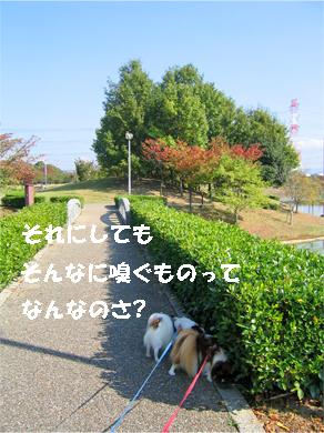 yuzukota071108-1.jpg
