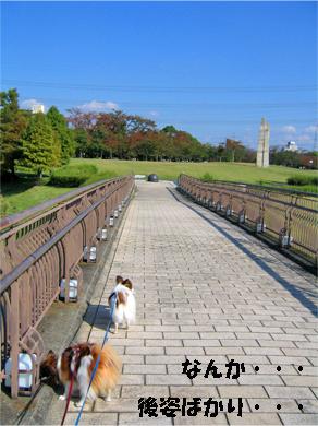 yuzukota071108-2.jpg