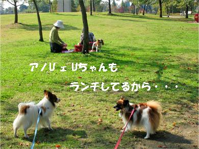 yuzukota071108-3.jpg