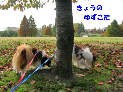 yuzukota071114-1.jpg