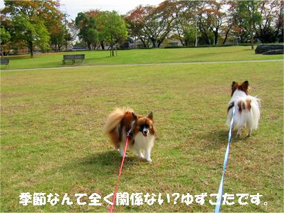 yuzukota071114-2.jpg