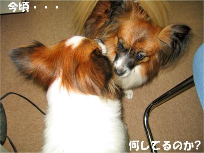 yuzukota071116-1.jpg