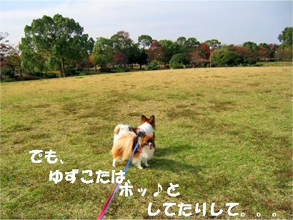 yuzukota071116-2.jpg