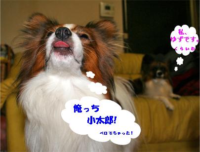 yuzukota071120-1.jpg