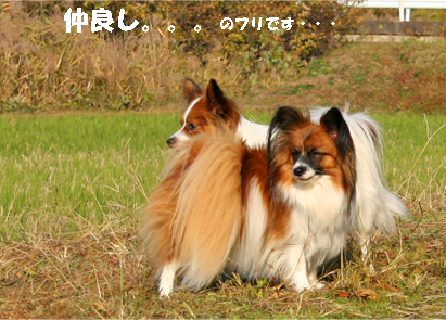 yuzukota071126-2.jpg