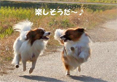 yuzukota071126-3.jpg