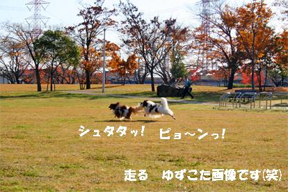 yuzukota071203-1.jpg