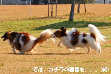 yuzukota071203-2.jpg