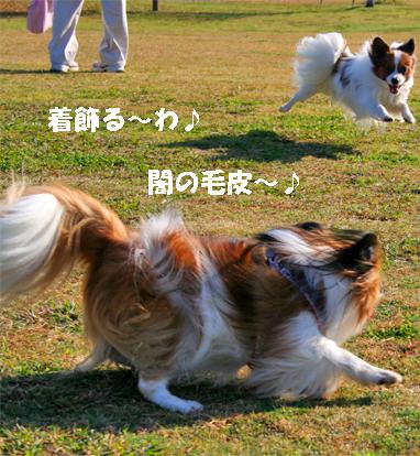 yuzukota071204-2.jpg