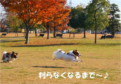 yuzukota071204-3.jpg