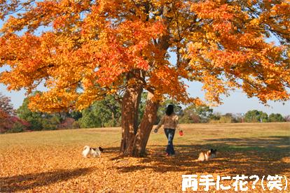yuzukota071205-2.jpg