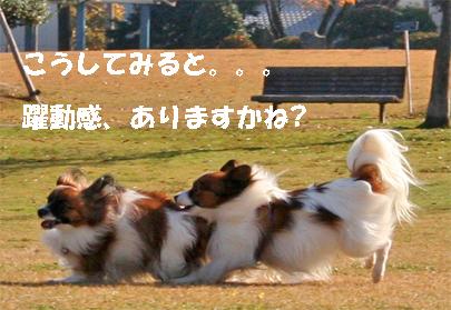 yuzukota071206-1.jpg