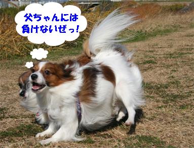 yuzukota071211-1.jpg