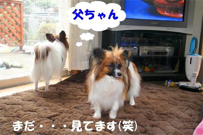 yuzukota071225-2.jpg
