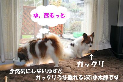 yuzukota071225-3.jpg
