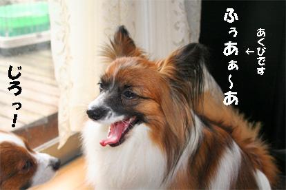 yuzukota071225-5.jpg