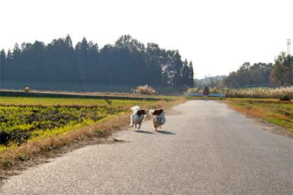 yuzukota071227-5.jpg