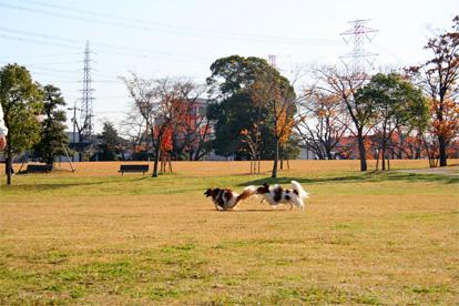 yuzukota071227-6.jpg