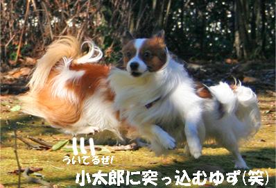 yuzukota080111-1.jpg