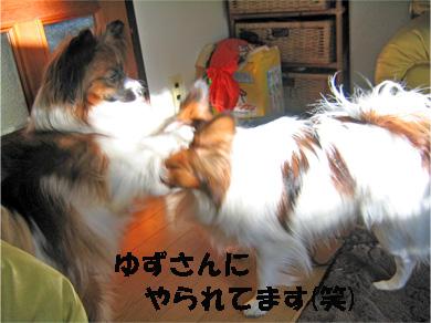yuzukota080118-1.jpg
