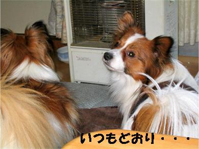 yuzukota080118-2.jpg