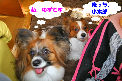 yuzukota080125-1.jpg