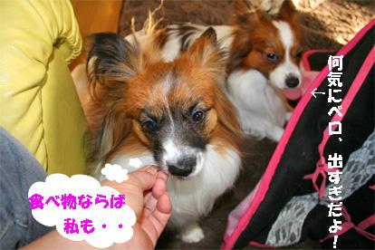 yuzukota080125-2_20080125105052.jpg