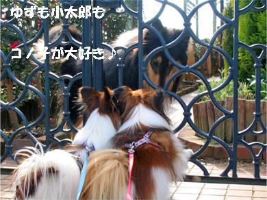 yuzukota080126-2.jpg