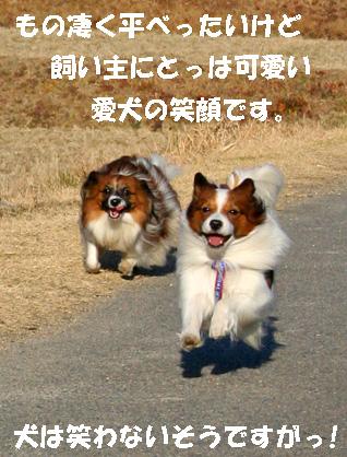 yuzukota080127-1.jpg