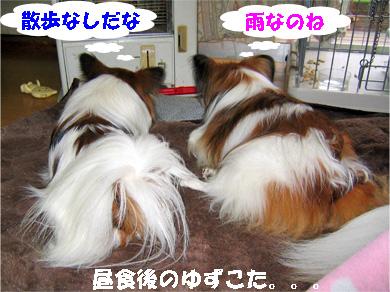 yuzukota080129-1.jpg
