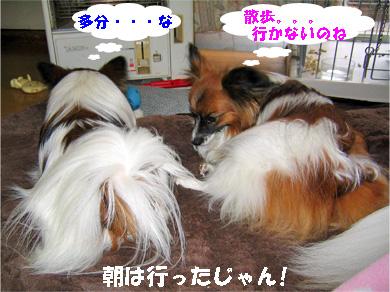 yuzukota080129-2.jpg