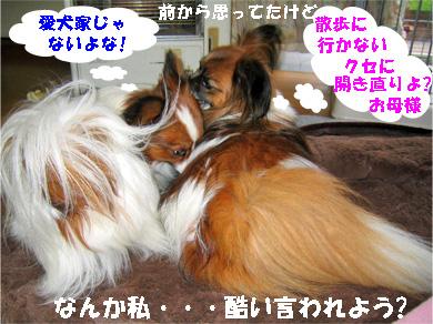 yuzukota080129-3.jpg