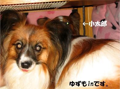 yuzukota080130-2.jpg