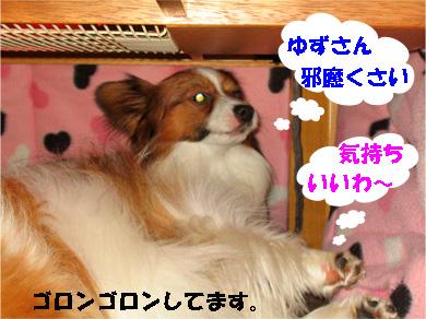 yuzukota080130-3.jpg