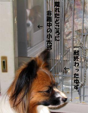 yuzukota080201-1.jpg