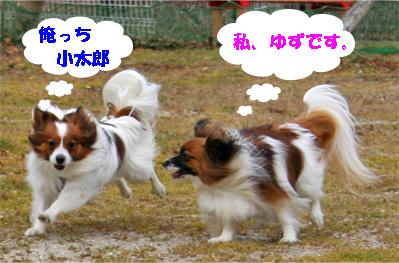yuzukota080202-1.jpg
