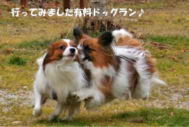 yuzukota080202-2.jpg