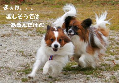 yuzukota080202-3.jpg