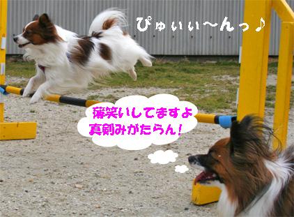 yuzukota080205-1.jpg