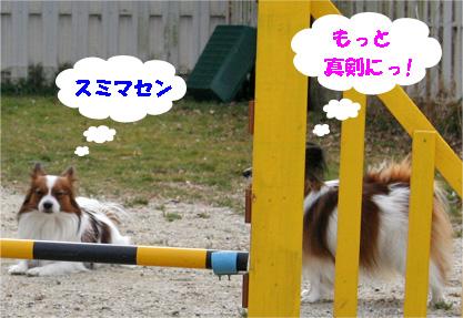yuzukota080205-2.jpg