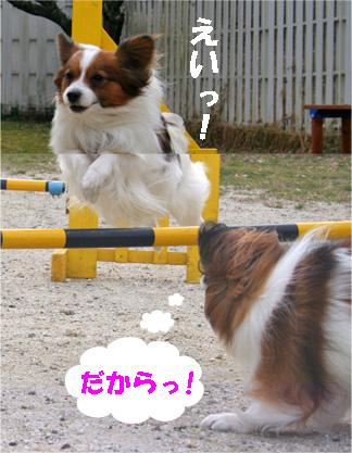 yuzukota080205-4.jpg