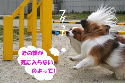 yuzukota080205-5.jpg