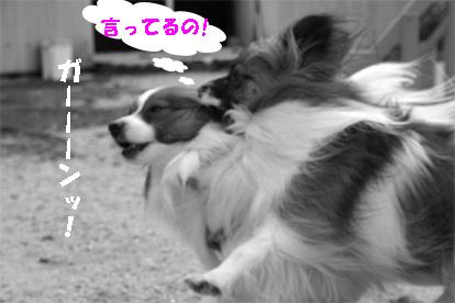 yuzukota080205-6.jpg