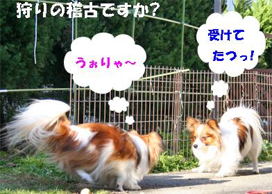 yuzukota080222-1.jpg