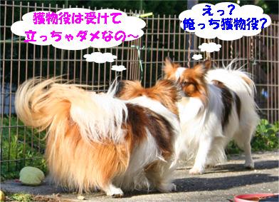 yuzukota080222-2.jpg